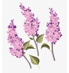 Set of lilac vector image