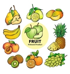 set of colorful hand draw fruit vector image