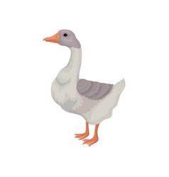 Cartoon goose large bird with white vector