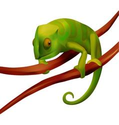 green chameleon on white background vector image