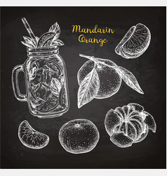 mandarin orange set vector image