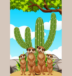 meerkats standing by the cactus plant vector image