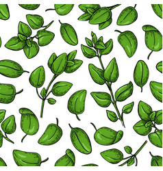 Oregano seamless pattern isolated herb vector