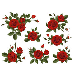 Red rose boutonniere set vector