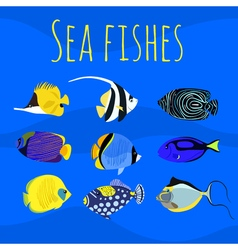 Set of sea exotic ocean tropical colorful fishes vector
