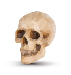 triangle human skull vector image