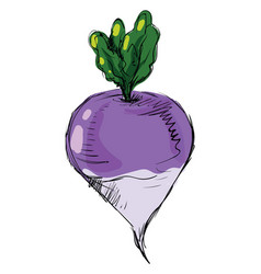Turnip with paints on white background vector