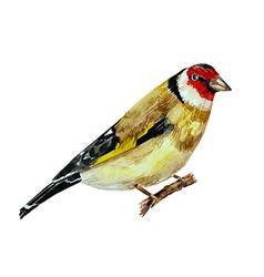 Watercolor painting bird on branch vector