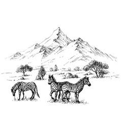 Zebras in wilderness sketch background vector
