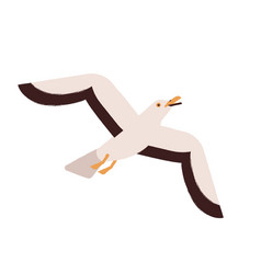 beautiful colorful seagull flying up or take off vector image