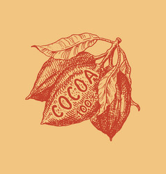 cocoa fruit beans or grains vintage badge or vector image
