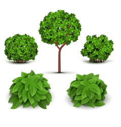 Garden bush with green leaves set vector