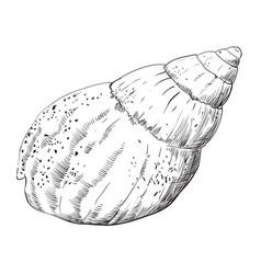 Hand drawing seashell-11 vector