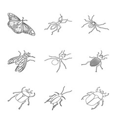 isolated object fauna and entomology sign vector image