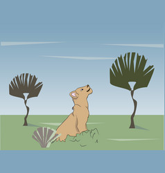 little lion cub sitting on nature looking up vector image