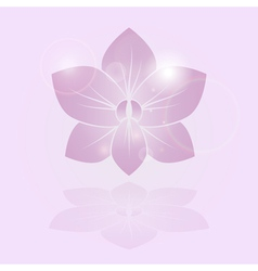 orchid shine flower vector image