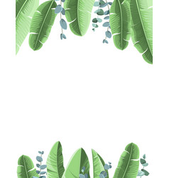 tropical background with banana leaves and vector image