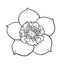 Hellebore christmas rose single flower top view vector