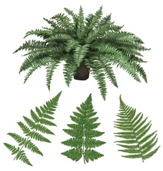 Fern and fern leaves hand drawn vector image