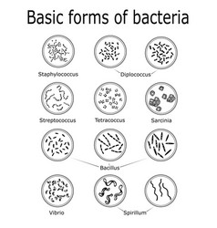 Basic forms of bacteria vector