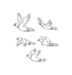 Eagle flying side cartoon collection set vector