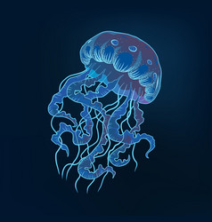 jellyfish hand drawn marine vector image