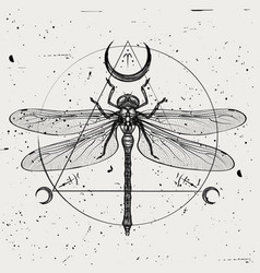 A hand-drawn dragonfly vector