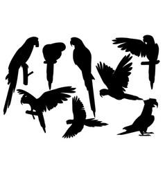 Black silhouette set adult parrot vector