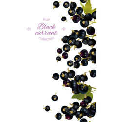 cherry vertical banner vector image
