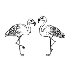 Flamingo bird engraving vector