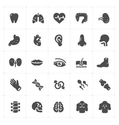 icon set - human anatomy filled icon vector image