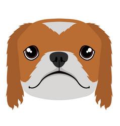 isolated pekingese avatar vector image