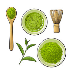 Matcha powder bowl wooden spoon and whisk green vector