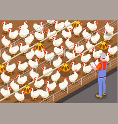 poultry isometric background vector image