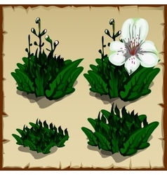 Stages growth orchid planting and withering vector