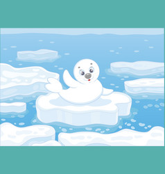 white-coat seal on an ice floe vector image