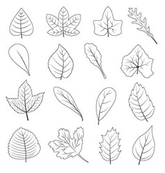 Black and White Leaves Shape Icon Set vector image
