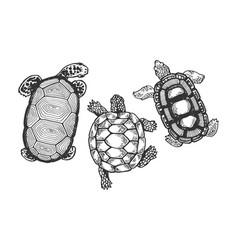 Turtle animal engraving vector