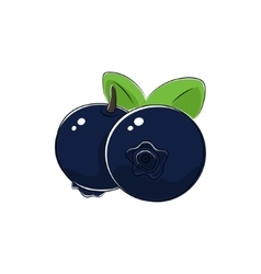 Black Blueberries Isolated on White vector