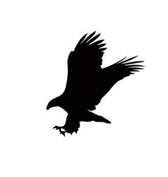 black silhouette of eagle isolated on whit vector image