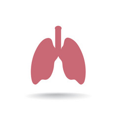 Lung anatomy icon medical human organ sign vector