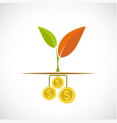plant with leaves growing from dollar coins vector image