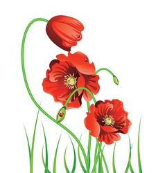 Poppy with Grass3 vector image