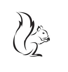 squirrel design on white background vector image