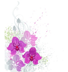 pink orchid vector image