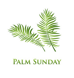 palm leafs icon for vector image