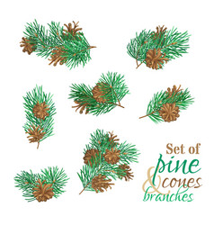 Branches of conifers with needles and cones vector