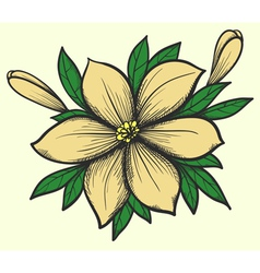 flower with leaves in a hand-painted graphic style vector image