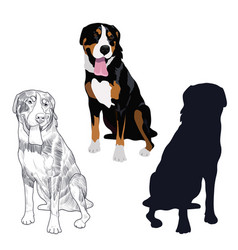 Swiss mountain dog in three different styles vector