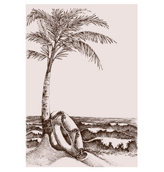 beach scene and sea view hand drawing palm tree vector image